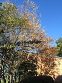 2014-10-25 14.19.09.jpg